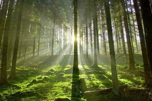 Ein schöner Platz für Baumbestattung; Wald durchflutet von Sonnenstrahlen die im Gegenlicht erstrahlen