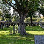 Bild eines Friedhofs mit wunderschönem großen Baum