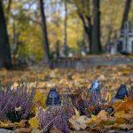 Bild von Grablichtern im Herbst zu Allerheiligen