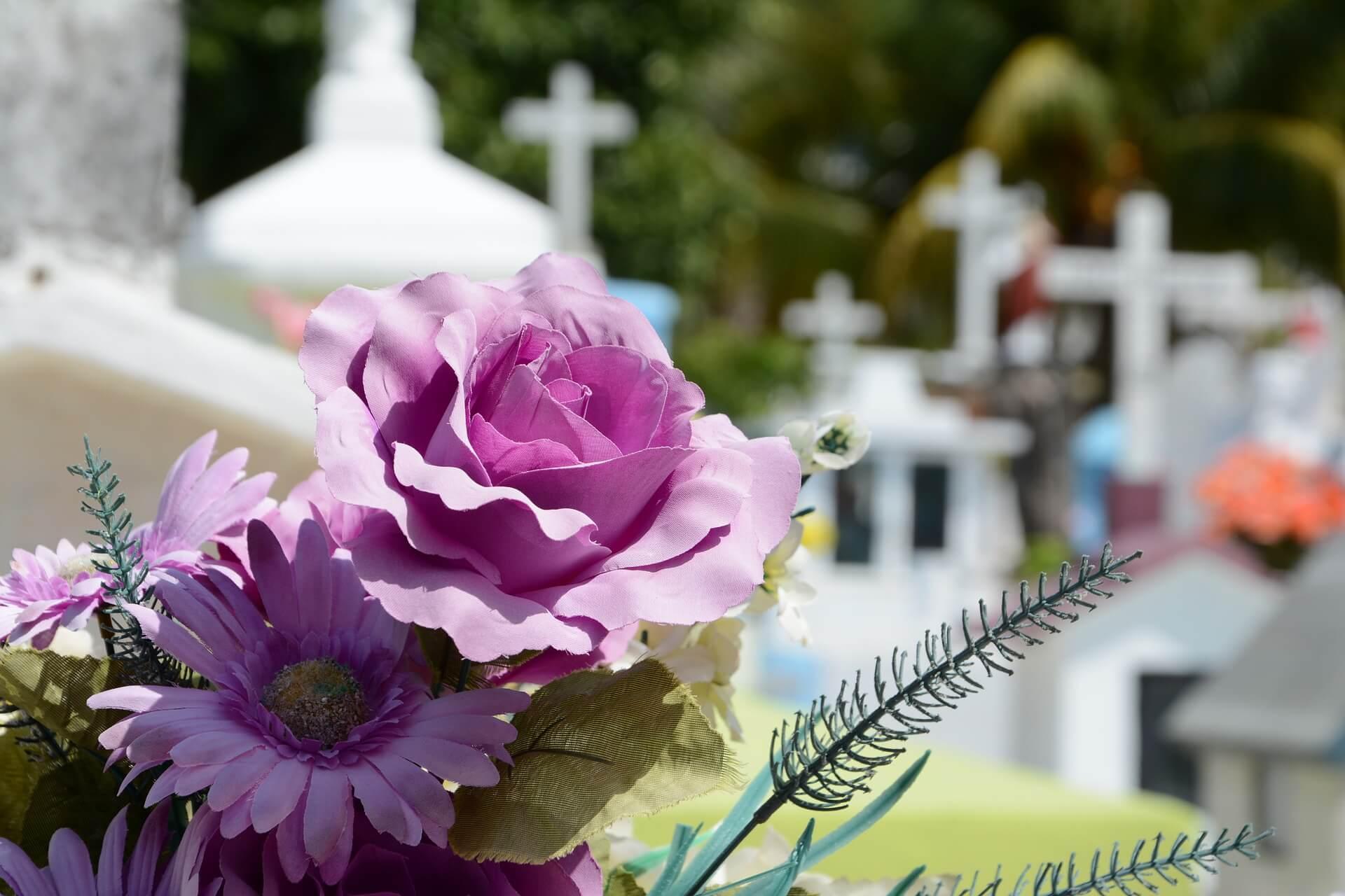 Ein schöner Friedhof, im Vordergrund violette Blüten